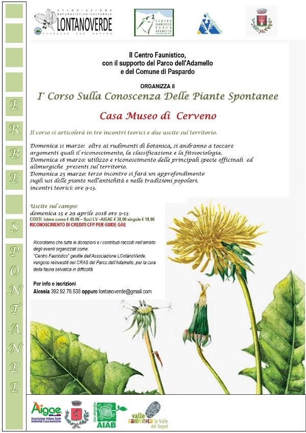 Conoscenza-piante-spontanee-