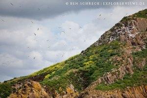 Ilot Verdelet Vogelschutzgebiet