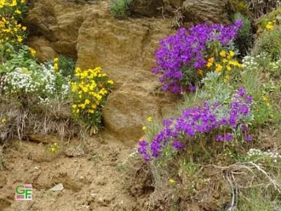 Blumen im Uferbereich