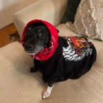 Rock Your Pet Like Bret Contest - Diego