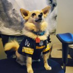 Rock Your Pet Like Bret Contest - Timmy
