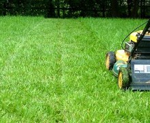 Texas Man Jailed For Not Mowing His Grass