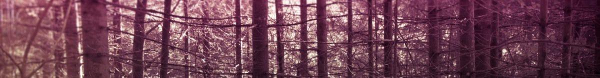 cropped-1-Foresta-Nera-interno-1.jpg