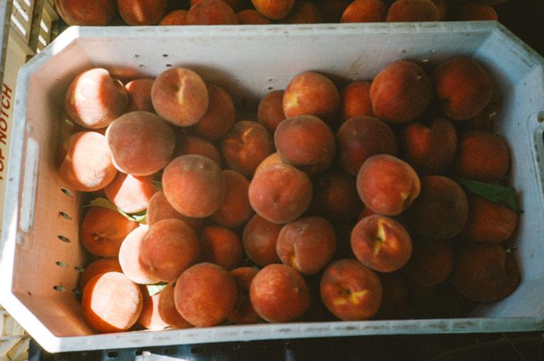 farmer's market peaches