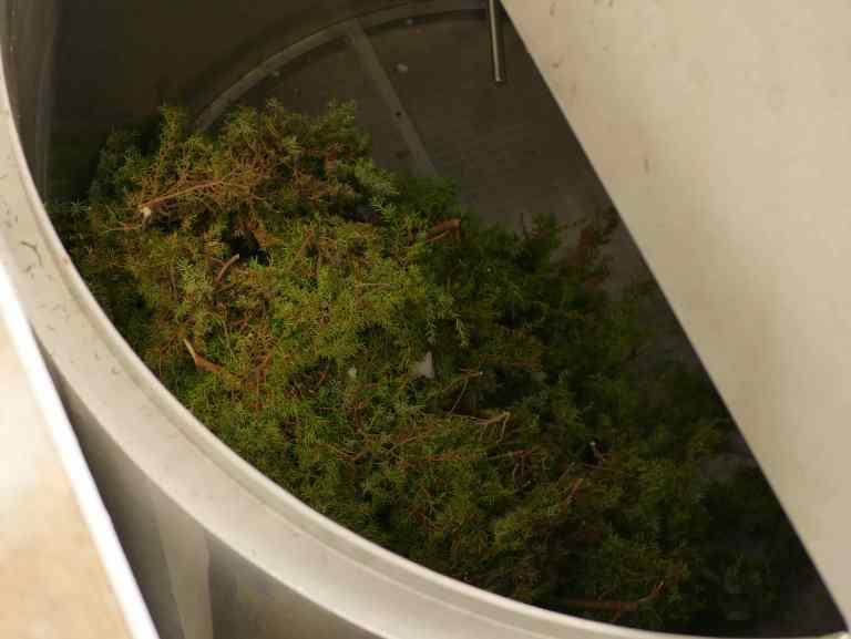 Making juniper infusion in Voss Bryggeri