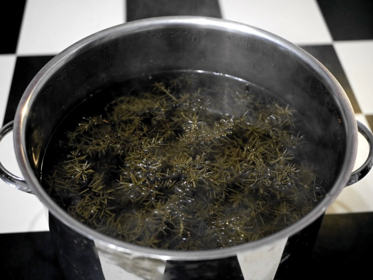 Juniper infusion for brewing