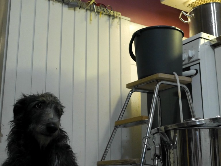 Brewing raw ale in the kitchen
