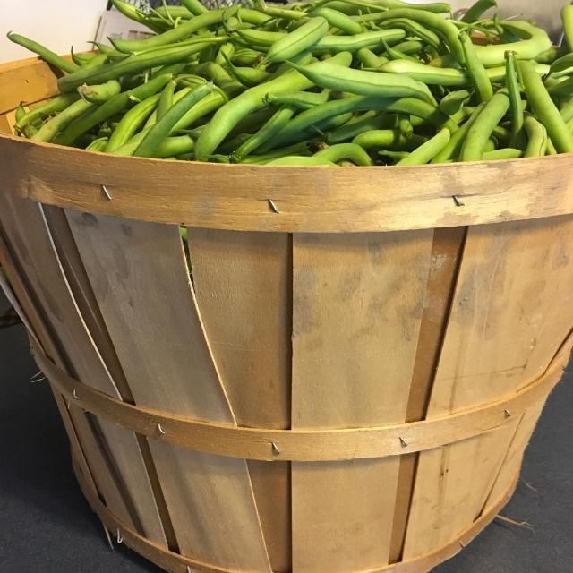 Bushel of green beans bluelakebeans gardening