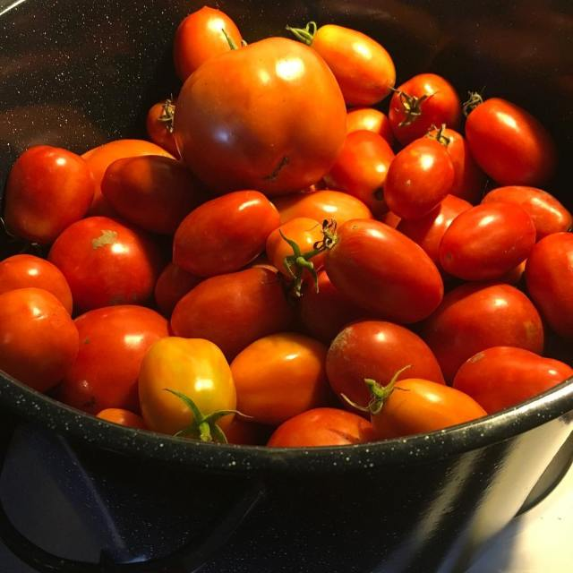 Time to make more pizza sauce! tomatoes gardening pizzasauce homemadehellip
