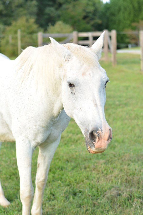 5 Lessons I've Learned From Horses