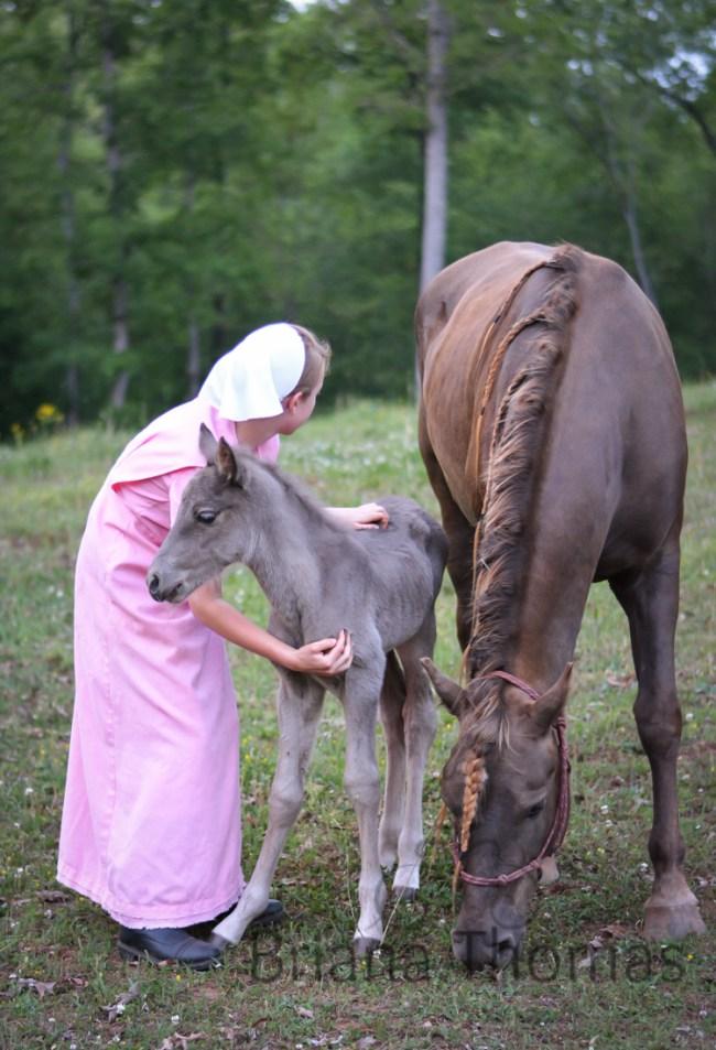 Halal's Princess Buttercup