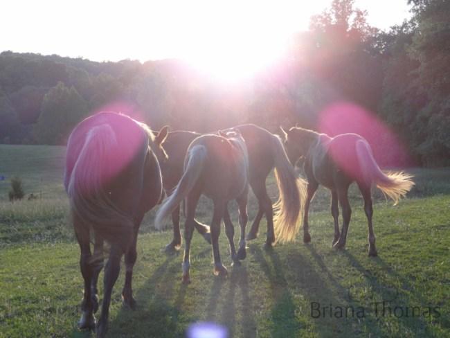 A Summer Evening at the Thomas Farm