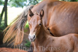 We Have a New Foal and He Needs a Name! {Foal Pictures}