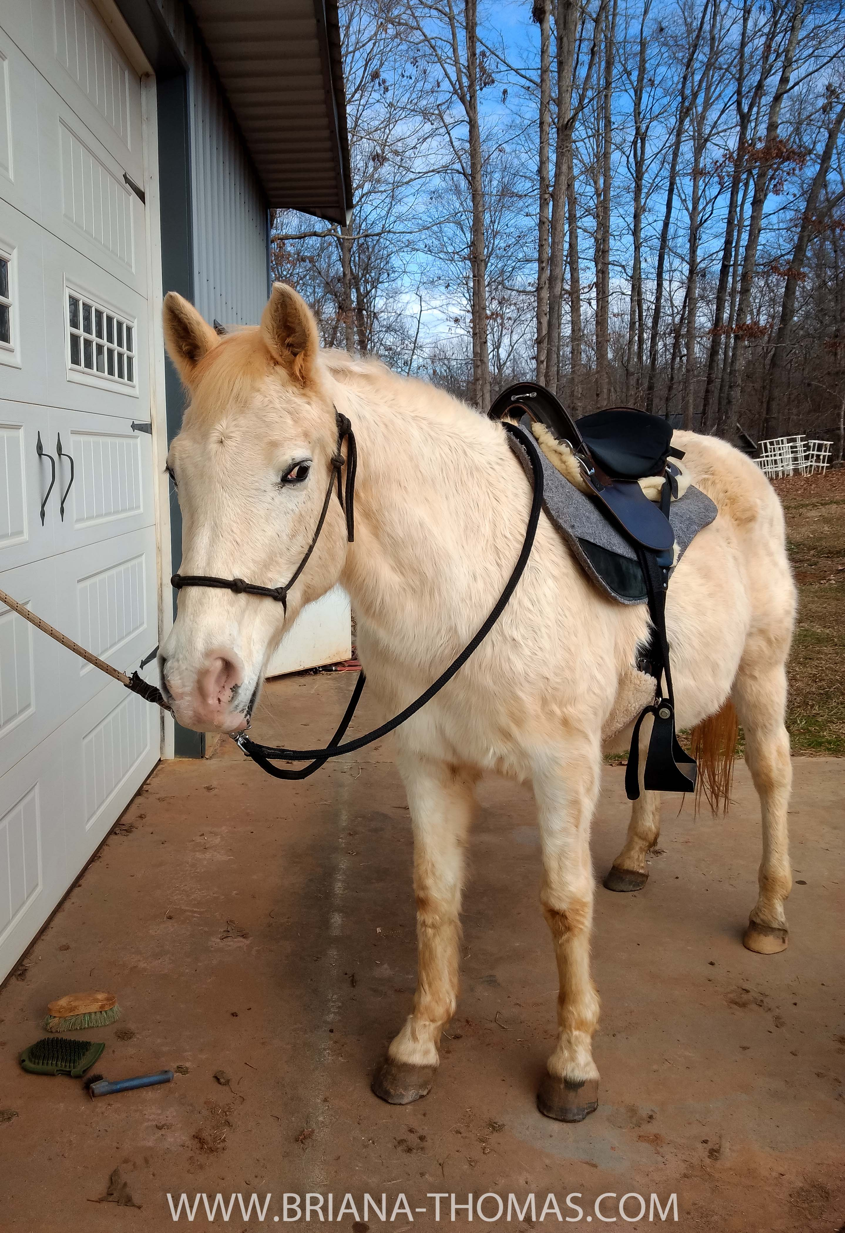 Traveler, the horse, ready for a ride