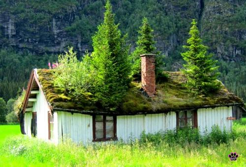 Treehouse, Norway
