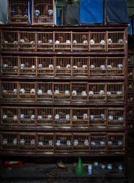 Bird Market, Shanghai, China (IMG_3227)