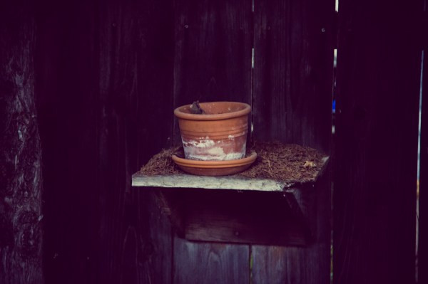 empty flower pot