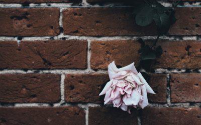 Reimagining Civil Disobedience | Reimagining Podcast | Episode 12