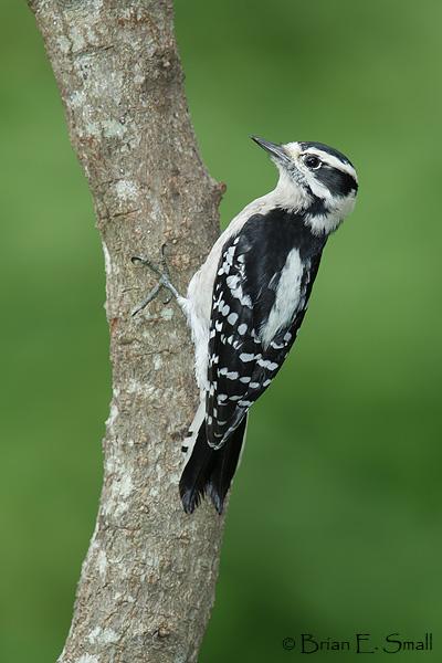 Brian E Small Bird Photography