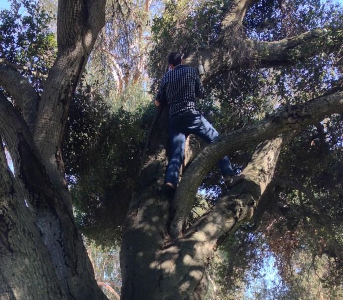 Geocaching - up a tree