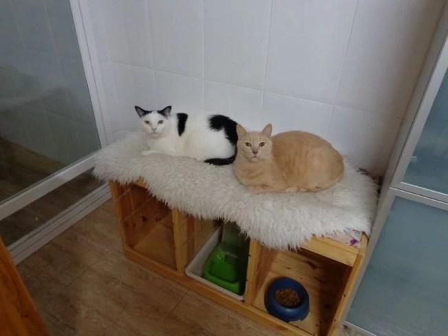 trofast-pet-bed-4