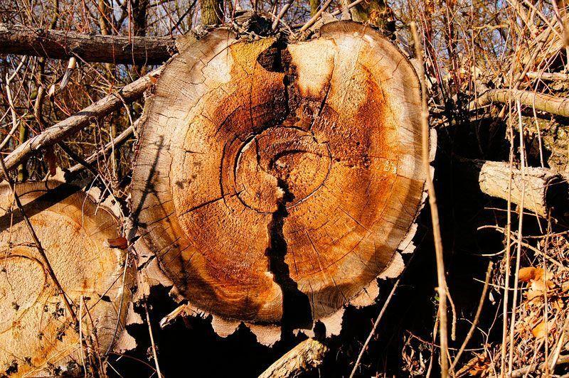 tipos de madera según su composición