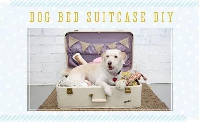 decorar con maletas y reciclar en una cama para mascotas