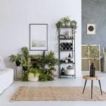 evitar el ambiente reseco con plantas