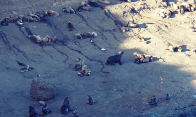Sealions near Puerto Madryn