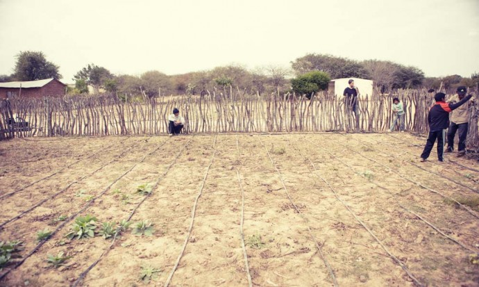 Rows of drip irrigation in the Wichi village