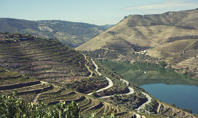 In the Douro Valley, you're surrounded by the ingredients of your food and drink
