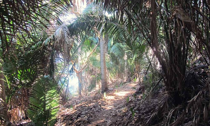 Jungle path in San Pancho