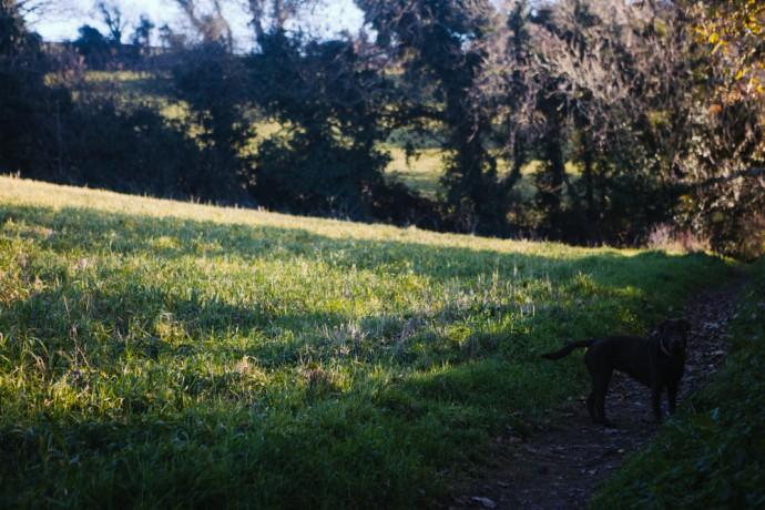 Dog walk salcombe snapes point