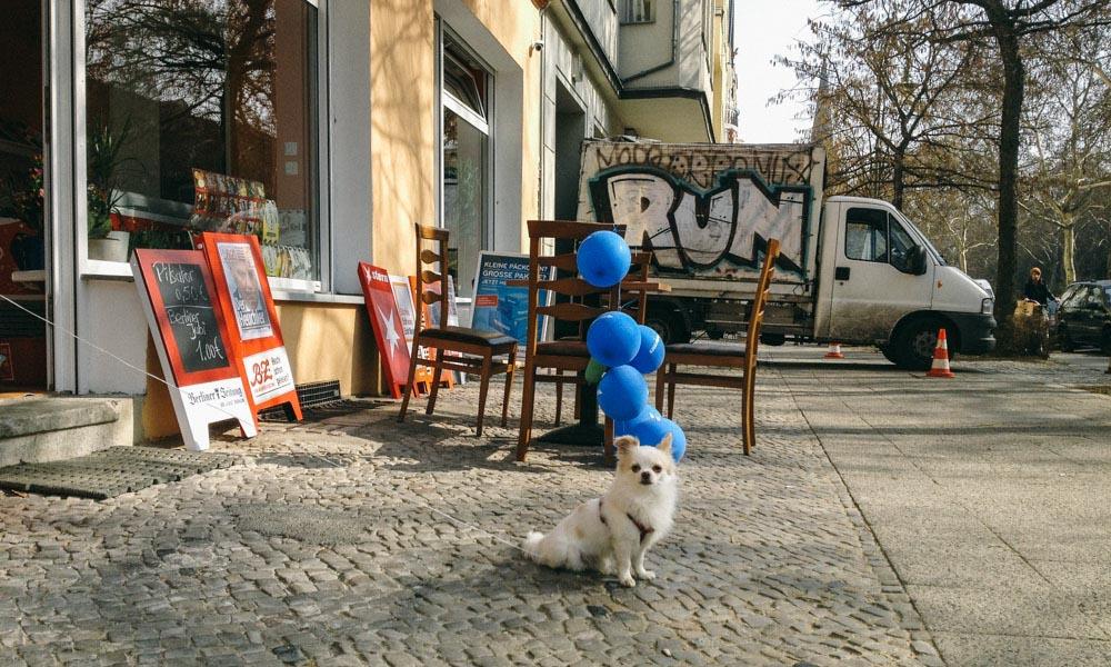 Little dog on the street in Berlin