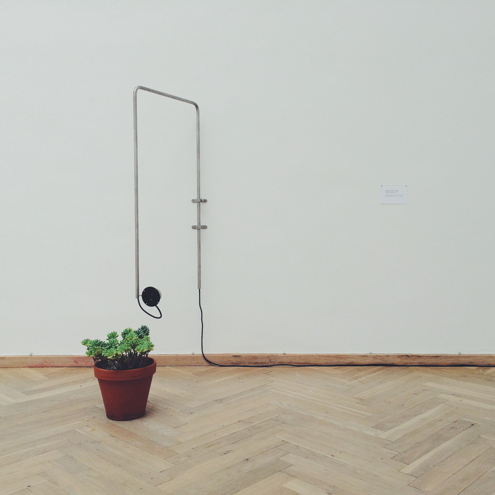 Music playing to a plant in Copenhagen