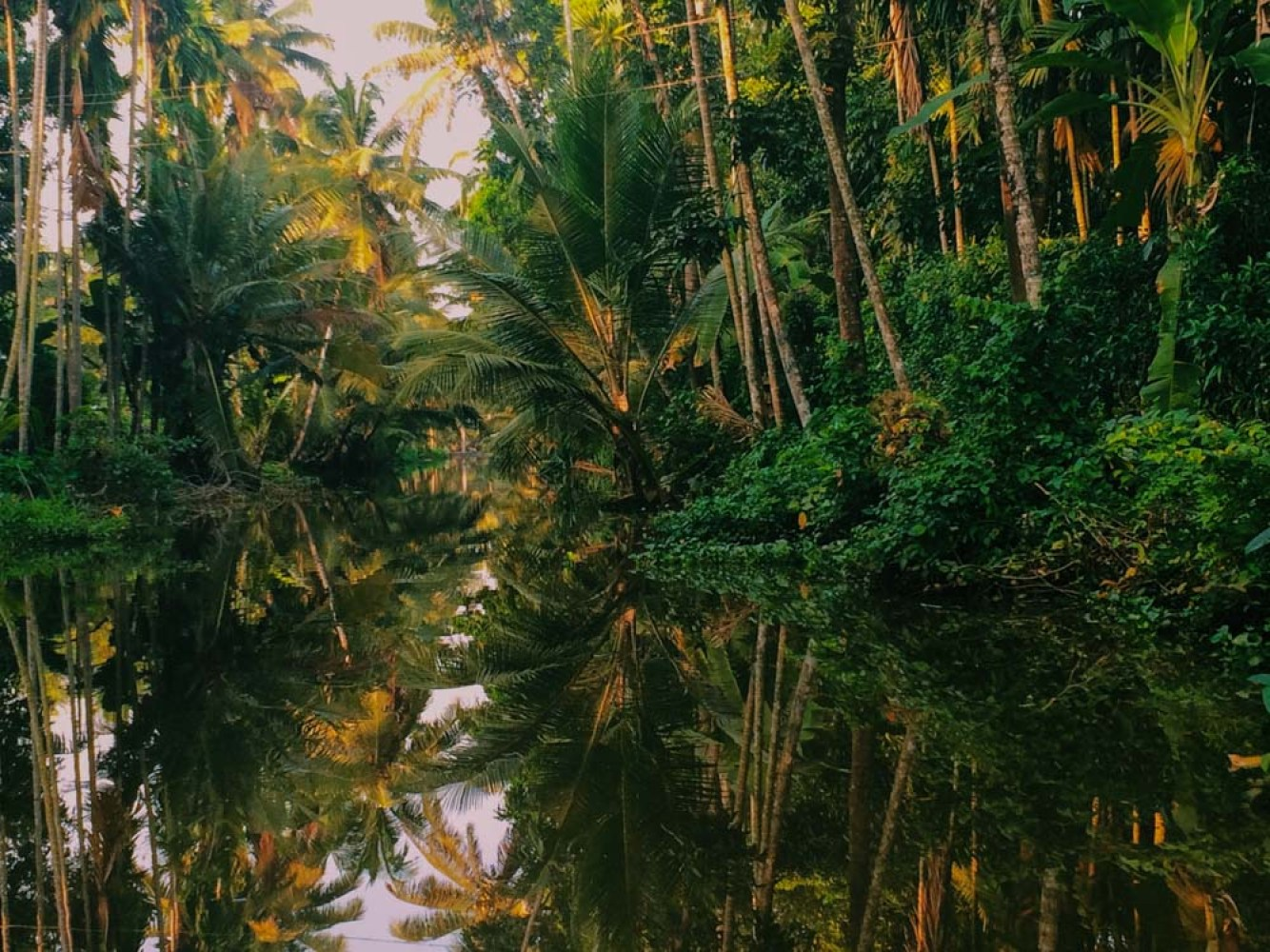 Mirrored palm trees in Kerala backwaters