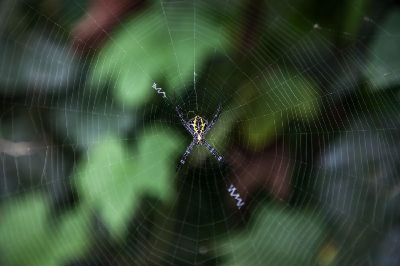 Spider in Alleppey