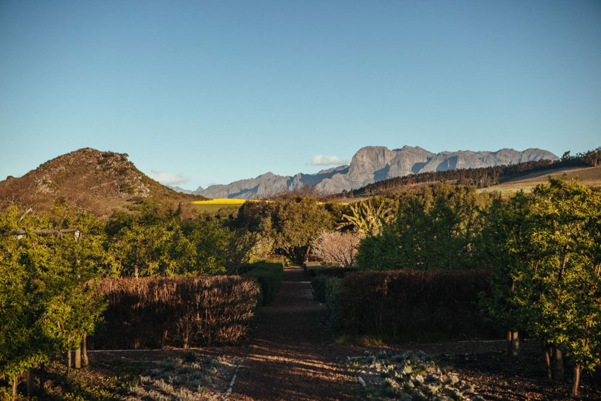Honeymoon in Cape Winelands, South Africa