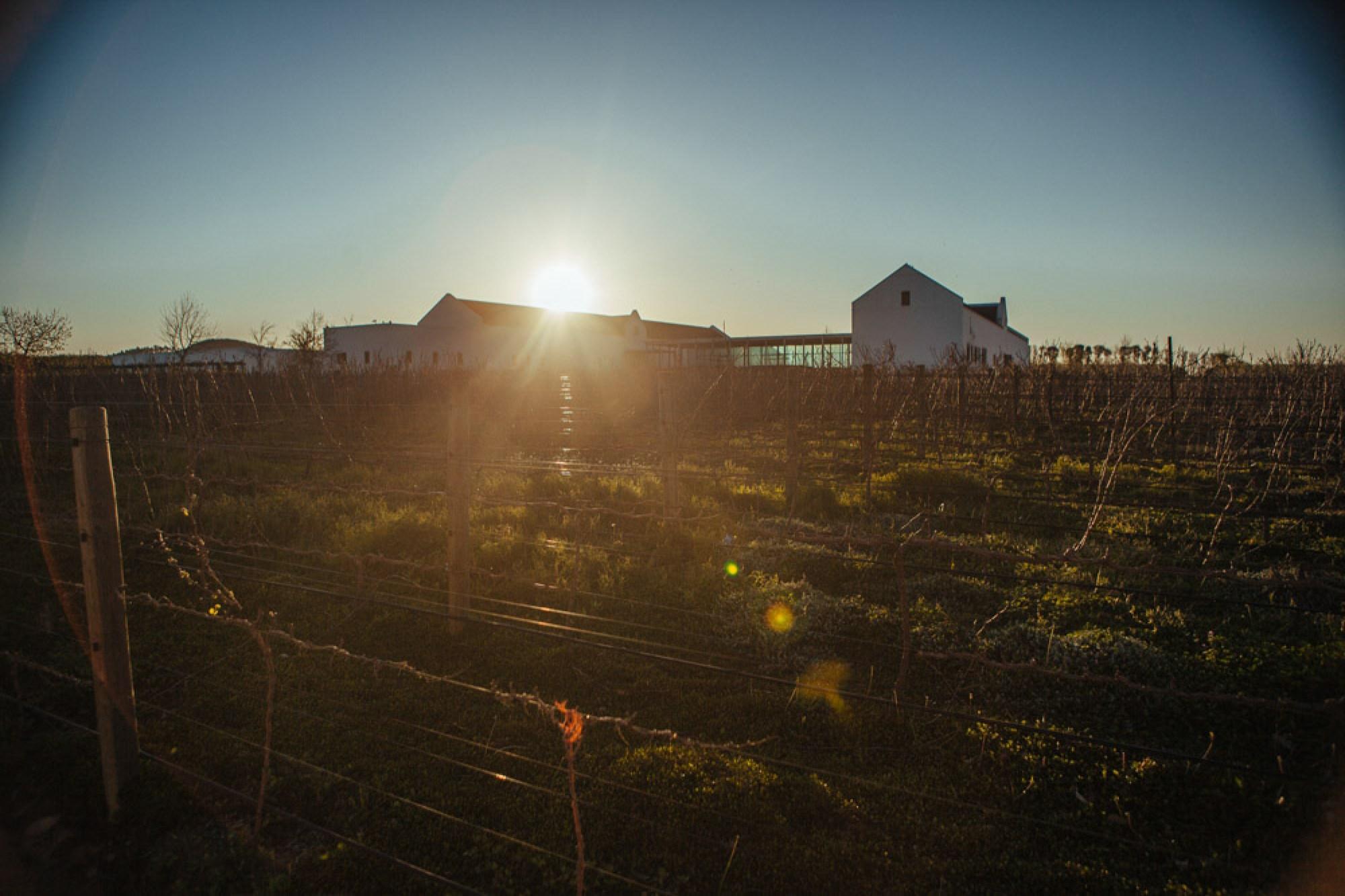 Babylonstoren, best vineyard in Cape Winelands