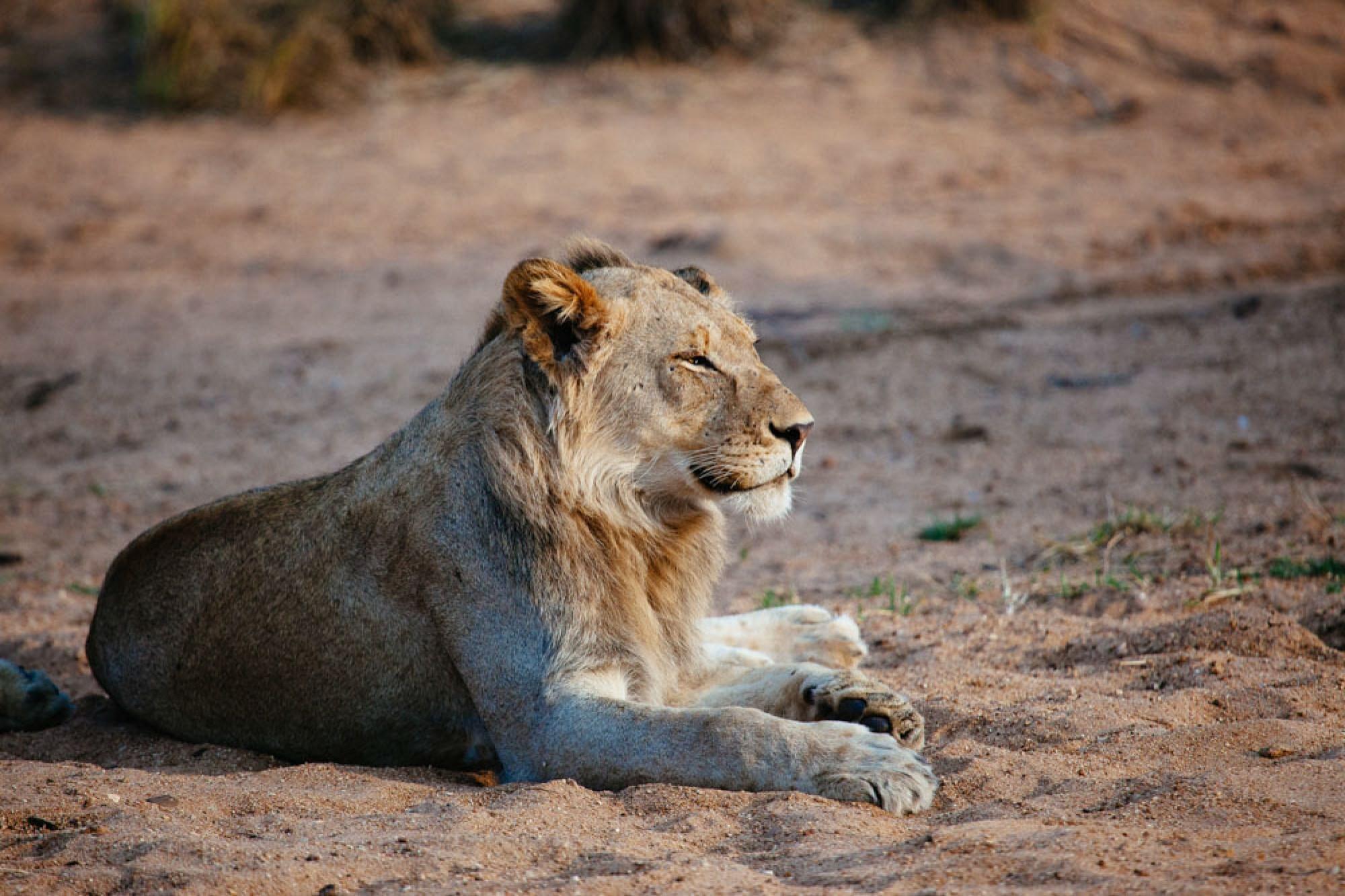South Africa safari honeymoon