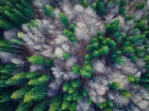 aerial view, forest, top