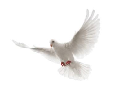 web-dove-2-layers