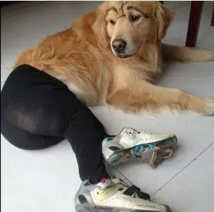 Dogs wearing pantyhose
