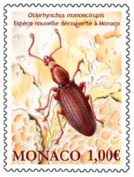 Monacos_endemischer_Prinzenkaefer
