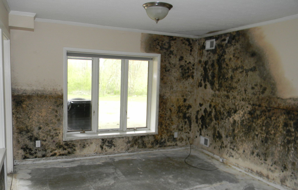 Portland Mold Remediation