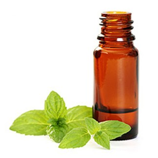 Aromatherapy and Essential Oil Revision and Refresh online course Brighton Holistics Online Training Course