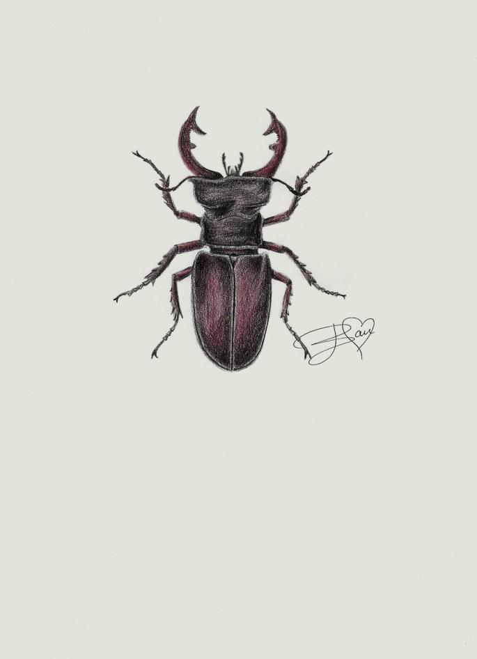 Vliegend Hert Stag Beetle