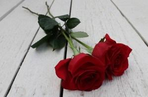 red-rose-1753907_640