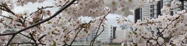 Hiroshima with cherry blossoms