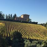 A vineyard in Florence